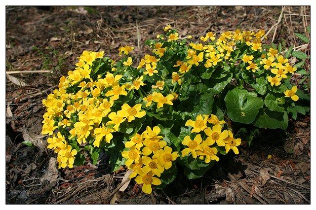цветы и цветки fleurs.demoi.ru