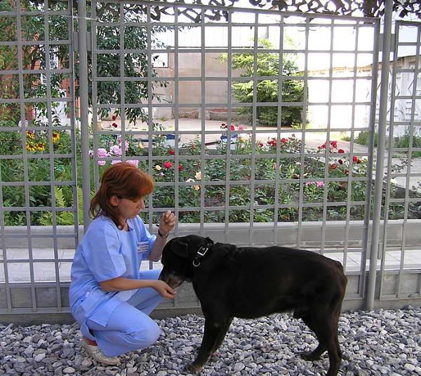 фото с животными нижний новгород