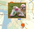 Где в Казани есть паримахерские для собак и кошек?