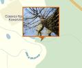 Деревья-гибриды тополя и осины Краснослободского района