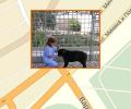 Где расположены приюты для животных в Нижнем Новгороде?