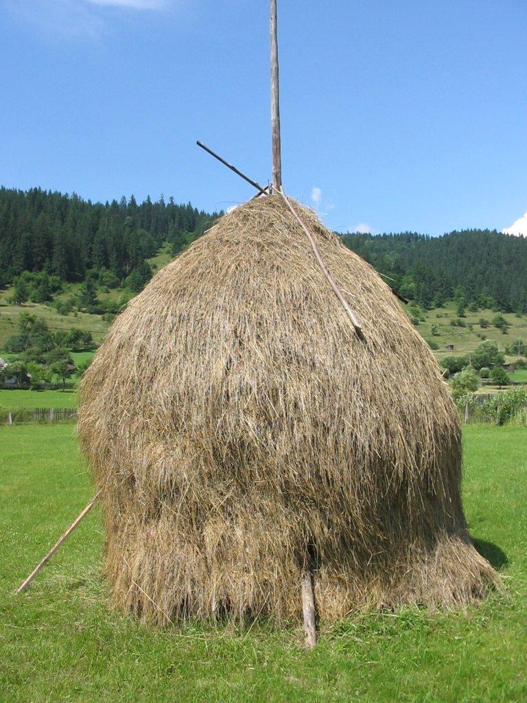 Где купить сено в Нижнем Новгороде?
