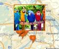 Где купить попугая и клетки в Н.Новгороде?