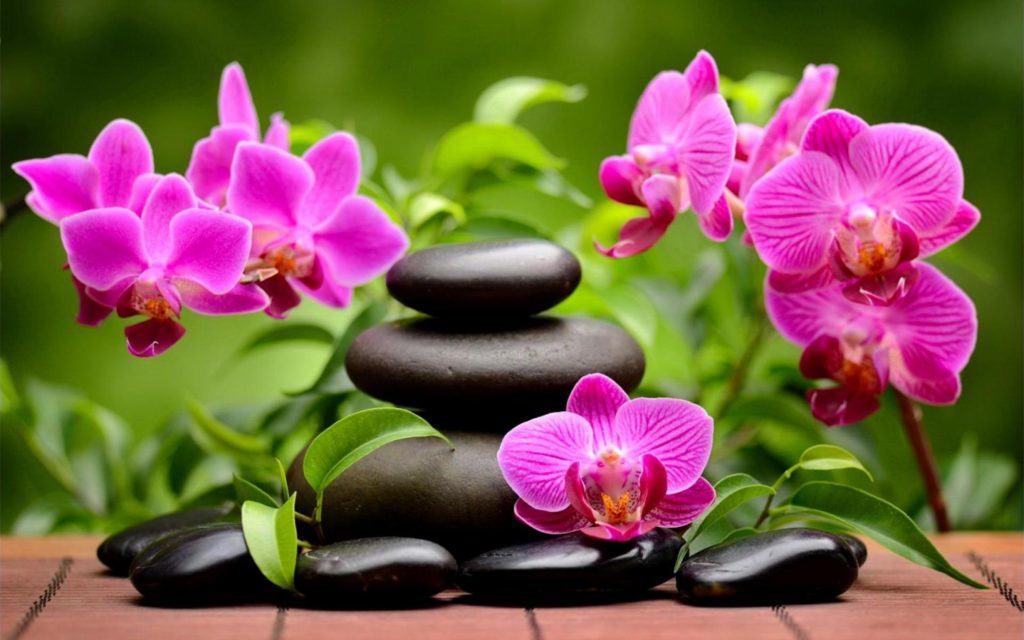 Где купить орхидеи в Самаре?