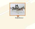 Питомник северных ездовых собак Клан Симурана