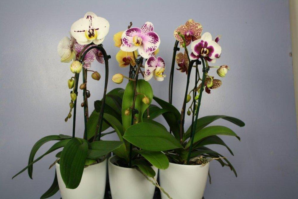 Где купить орхидеи в Нижнем Новгороде?