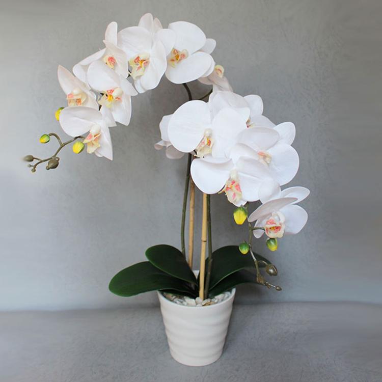 Где купить орхидеи в Казани?