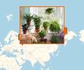 Где лучше всего купить комнатные и горшечные цветы в Самаре?