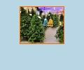 Где купить новогоднюю ёлку в Казани?
